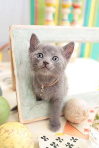 めっちゃ柔らかいw…Twitterで見つけた「完璧なフォルムのネコ」報告
