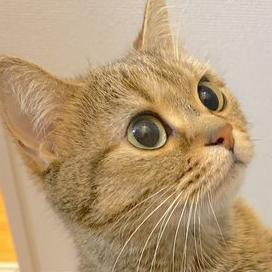 可愛すぎやろ〜!!Twitter報告『癒される猫ツイート』が最高。。