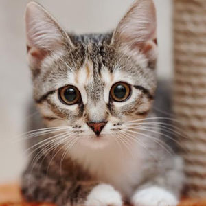 【自粛の癒し】もふもふ猫動画YouTubeチャンネル10選