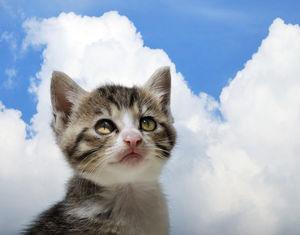 ネコ&生き物の『きっとこう言いたそう・思ってそう』ってなるツイ民の話が面白い