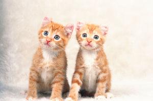みんなが報告した『寄り添ってるネコたち』が癒しに満ちてる件