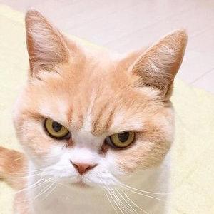 変顔もかわいい♡感情が顔に出てる犬猫たちが面白いw