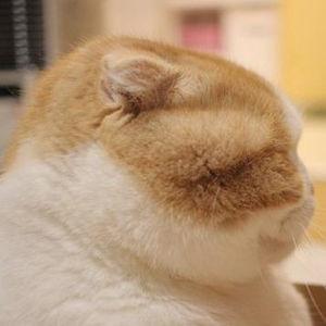 可愛すぎてビックリ!Twitterで話題になった猫たちの報告