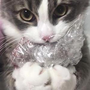 Twitter発。『食べ物を前にしたネコたち』が可愛すぎる件