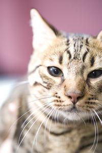 わかってニャン…Twitterで見つけた「哀愁漂う猫の表情」報告