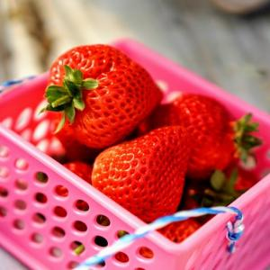里の駅広川くだもの村|5種の苺がお手頃料金でいちご狩りできるよ!