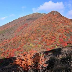 くじゅう、扇ケ鼻と肥前ケ城との谷間の紅葉を見にp5(星生山の赤く輝く紅葉)