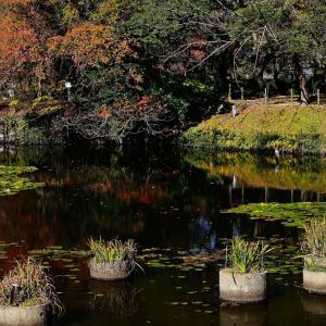 晩秋の舞鶴公園からp2