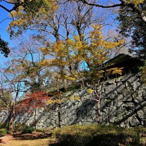 晩秋の舞鶴公園から