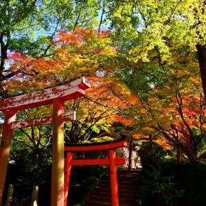 竈門神社の紅葉p2(今年も綺麗でした^o^)