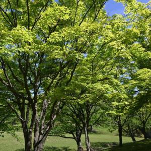 春日公園の新緑から(z50のエフェクト三昧)