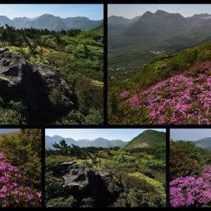 くじゅう泉水山から(2019年5月末)ミヤマキリシマの咲き始め