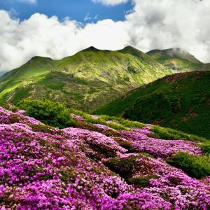 去年のくじゅう三俣山のミヤマキリシマから
