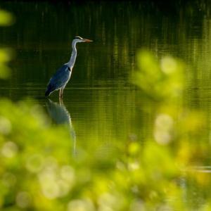 いつもの池をフォト漫歩