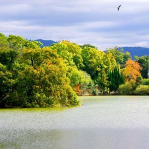 冬陽の水上池