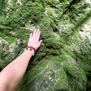 初めて苔を触るの巻。