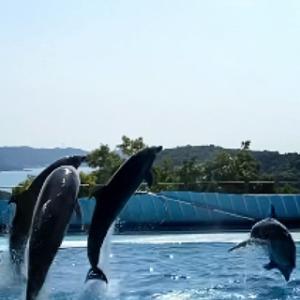 和歌山県の旅/南紀白浜(アドベンチャーワールド:イルカ・ペンギン編とランチ) ⑤