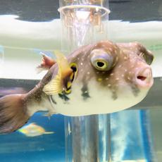 サンピアザ水族館♪