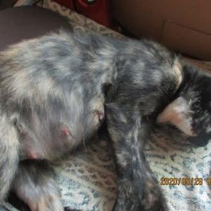 去年の秋亡くなったサビ猫フクちゃんが残したもの