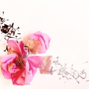 枯れゆく花