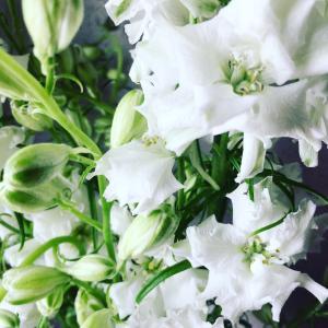 花祭りに選んだ お花