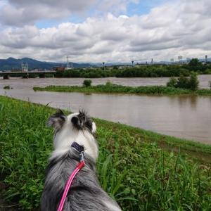 河川敷、一部水没!
