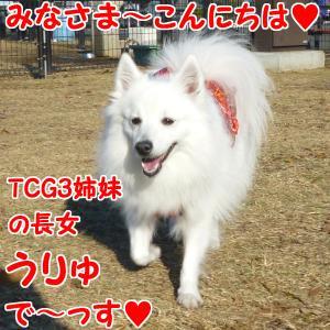 TCG3姉妹のちょっと早いお誕生日会vと、今月の新作2!?