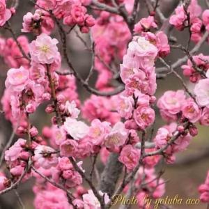 2021 梅(Plum blossom)