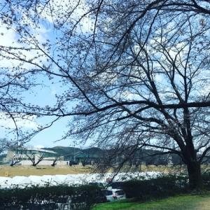毒親フェスお花見岡山のお知らせ。