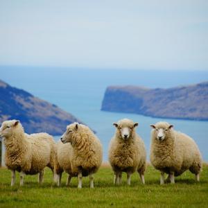 【ゆるーい食育】第3回:テーマはニュージーランド〜世界の料理を一緒に知る・作る〜