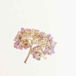 紫陽花の帯留め