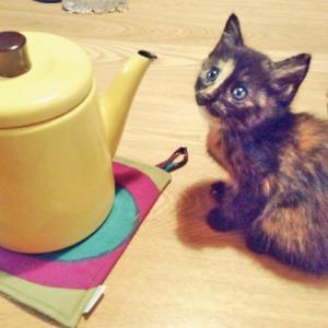 猫のミーちゃん