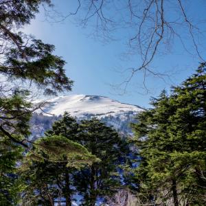 コロナ禍で山を買う人が増えている??山に投資するなら。。