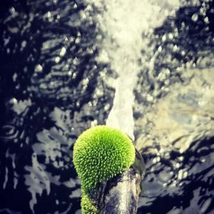 池のほとりに美しい苔が育つのを見た〜Happy Birthday George!