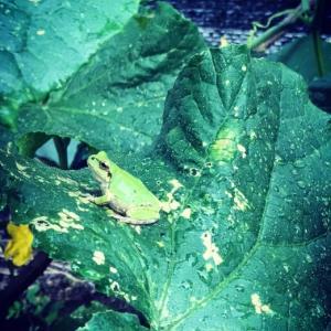 フランスの田舎の家庭菜園化計画進行中とベレロフォン。