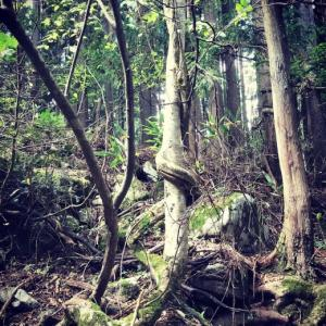 ガーデニングのアイデア〜山中の渓流の中州、天蓋、木に巻き付く木。