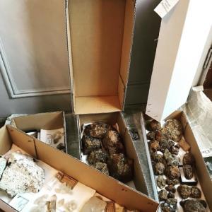 整理整頓〜鉱物標本、古い瓶などなど趣味もの全般decor。