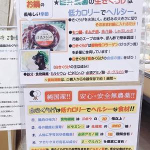 ヘルシーメニューが凄い〜Olts Cafe(オルツカフェ)(本巣郡北方町)