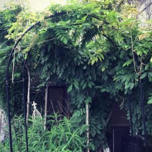 来る酷暑!庭の藤棚の下で休憩するのだ〜ローズアーチ活用法。