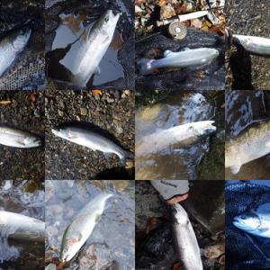 神流川オフシーズンニジマス釣り場
