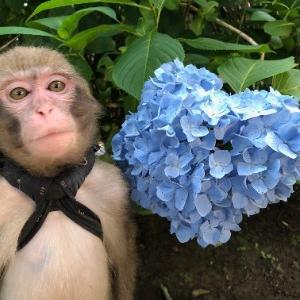 牛久大仏のお花