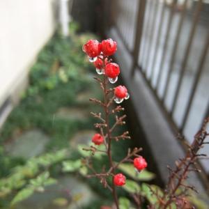 11/23土 今日は塾内テスト日です! &今日は勤労感謝の日