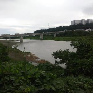 2020/7/6   相模川の様子