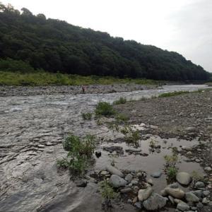 相模川の鮎調査