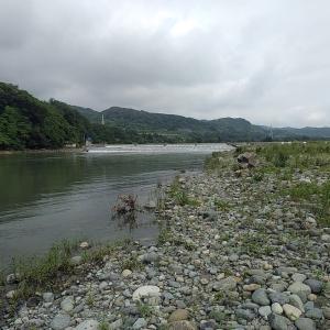 七月最初の相模川調査