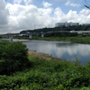 2021年 相模川水系中津川の鮎調査