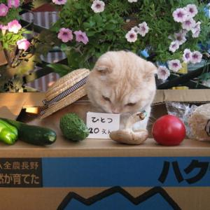 高GI値の野菜で血糖値⇧💧