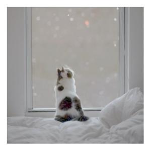 * 初雪 ⛄