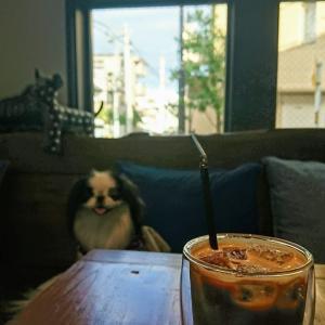 大島で一息 (オリイーリオ)ドッグカフェ