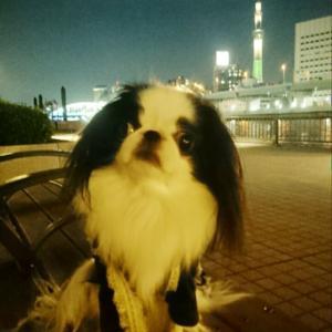 狆とわんこ丼とビール ドッグデプトカフェ浅草隅田川テラス